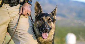 2017 K9 Grant photo of K9 on leash.