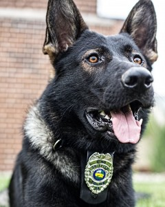 K9 Griffith Gino