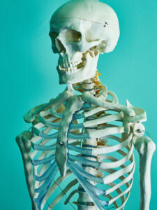 classroom skeleton model