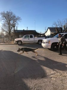 K9 from Alamogordo Police Department lunging forward.