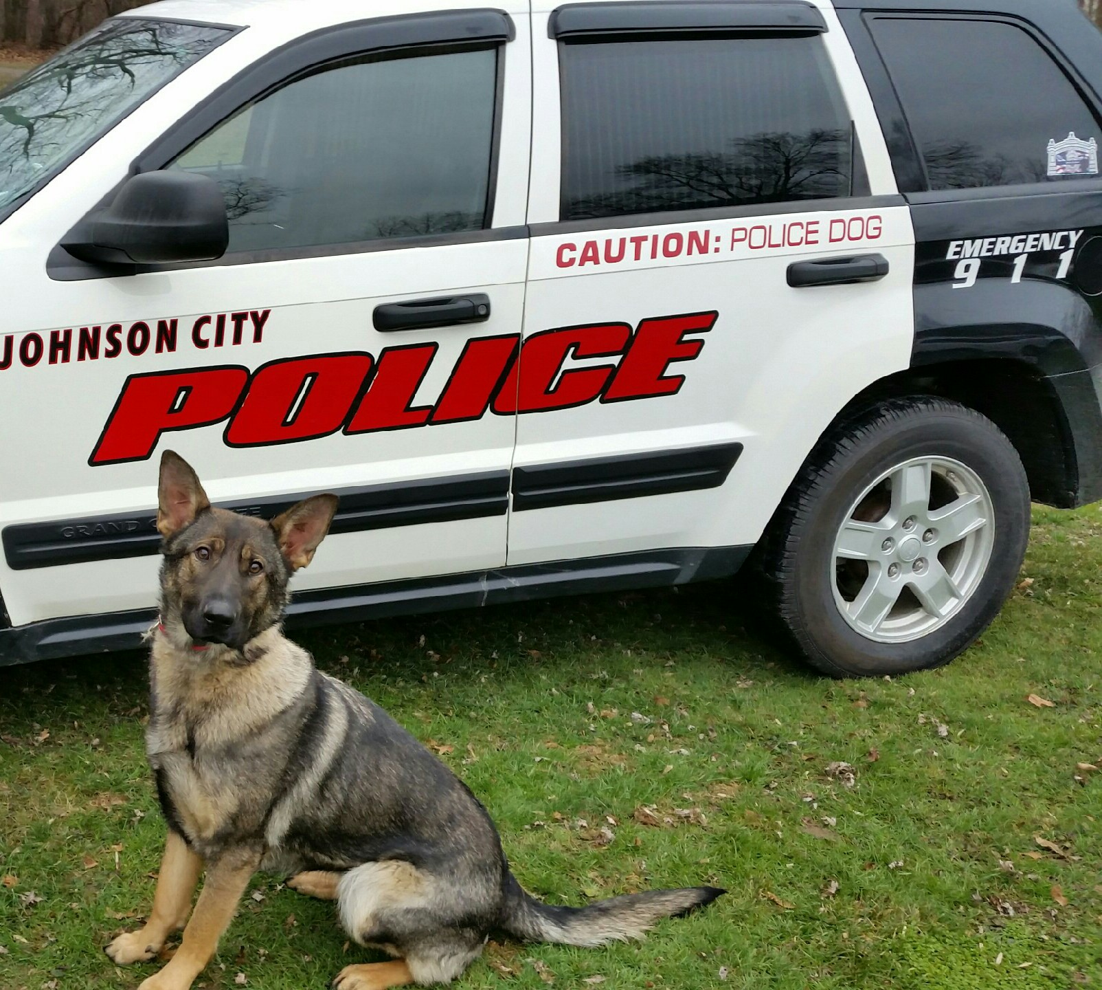 Partnered with Officer Daniel Gavin, 1.5 year old K9 Officer Anouk is the rookie of the Johnson City K9 unit.