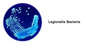 Legionella bacteria and biohazard cleanup.