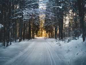icy road in the forest