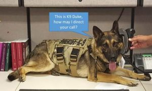 This is K9 Duke, how may I direct your call?