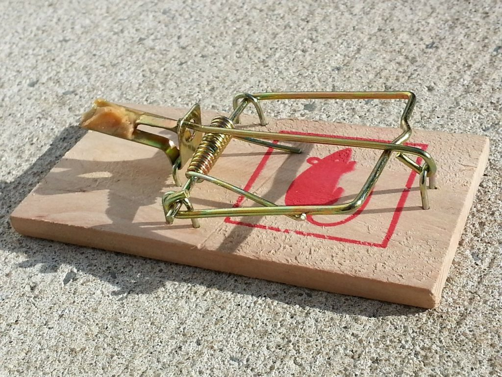 closeup of basic baited mouse trap