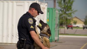 Pfluggerville, TX Police Department with K9 holding tennis ball in his mouth.