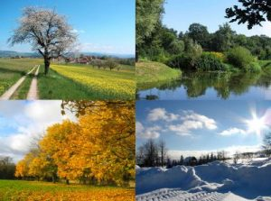Showing four season: spring, summer, sale and winter.